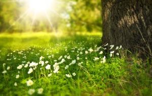 Springtime flowers Credit: Pixabay